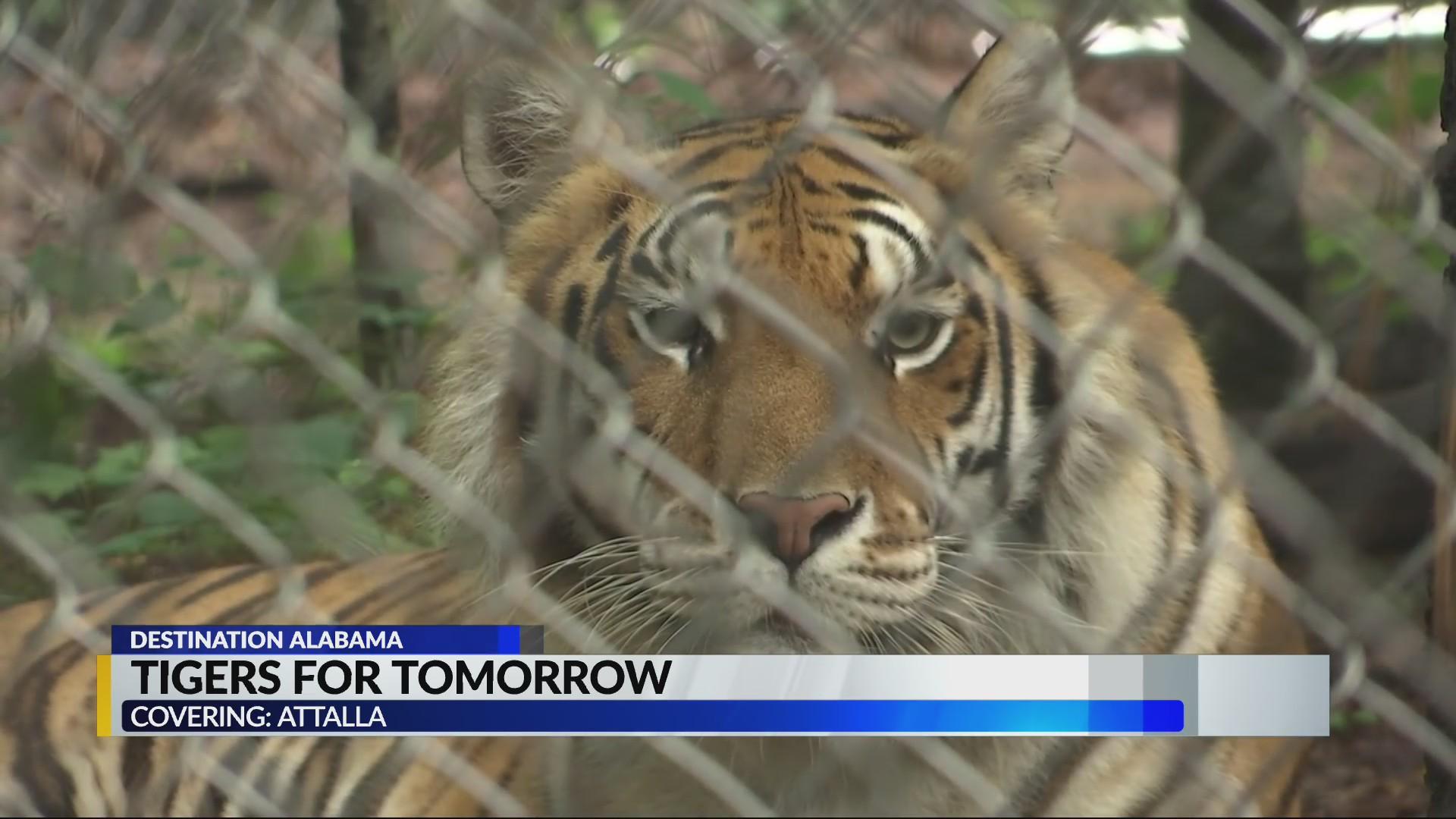 Destination Alabama: Tigers for Tomorrow
